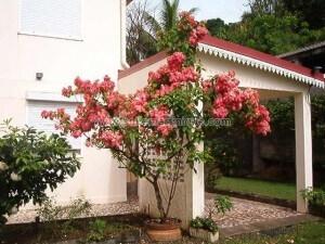 G--te-de-France-Martinique-N--83-4-pers-2---pis-Ducos-4.jpg