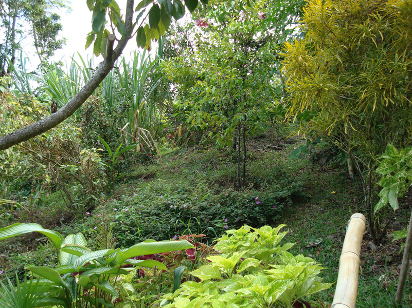 Ecotours Jardin Creole Lieux A Visiter Tourisme Belle Martinique