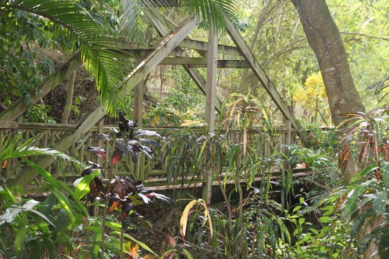 parc-jardin-ethnobotanique-association-sud-botanique-jardin-le-marin-martinique