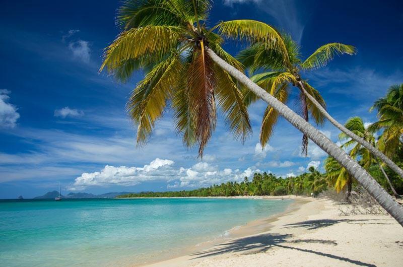 """Résultat de recherche d'images pour """"plage des salines martinique"""""""